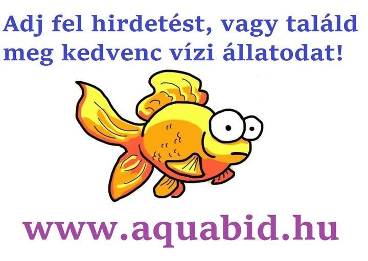 www.aquabid.hu